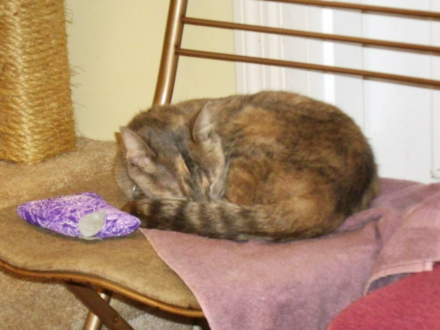 Day 149: Kitty Christmas at Pets, Inc.! 5
