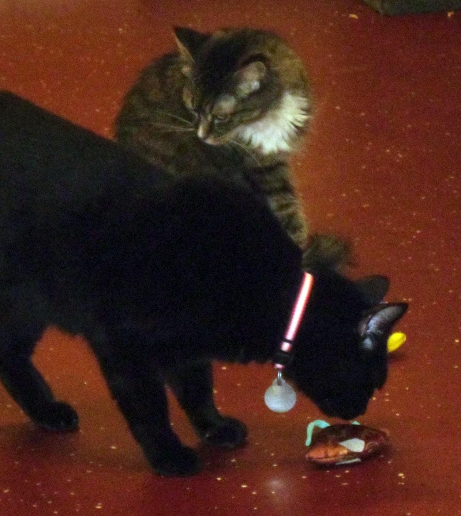 Day 149: Kitty Christmas at Pets, Inc.! 9