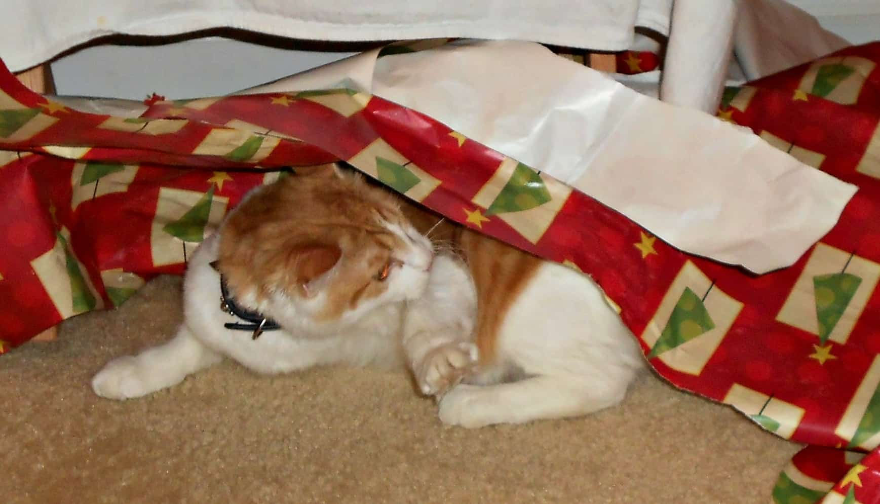 cat tangled in wrapping paper