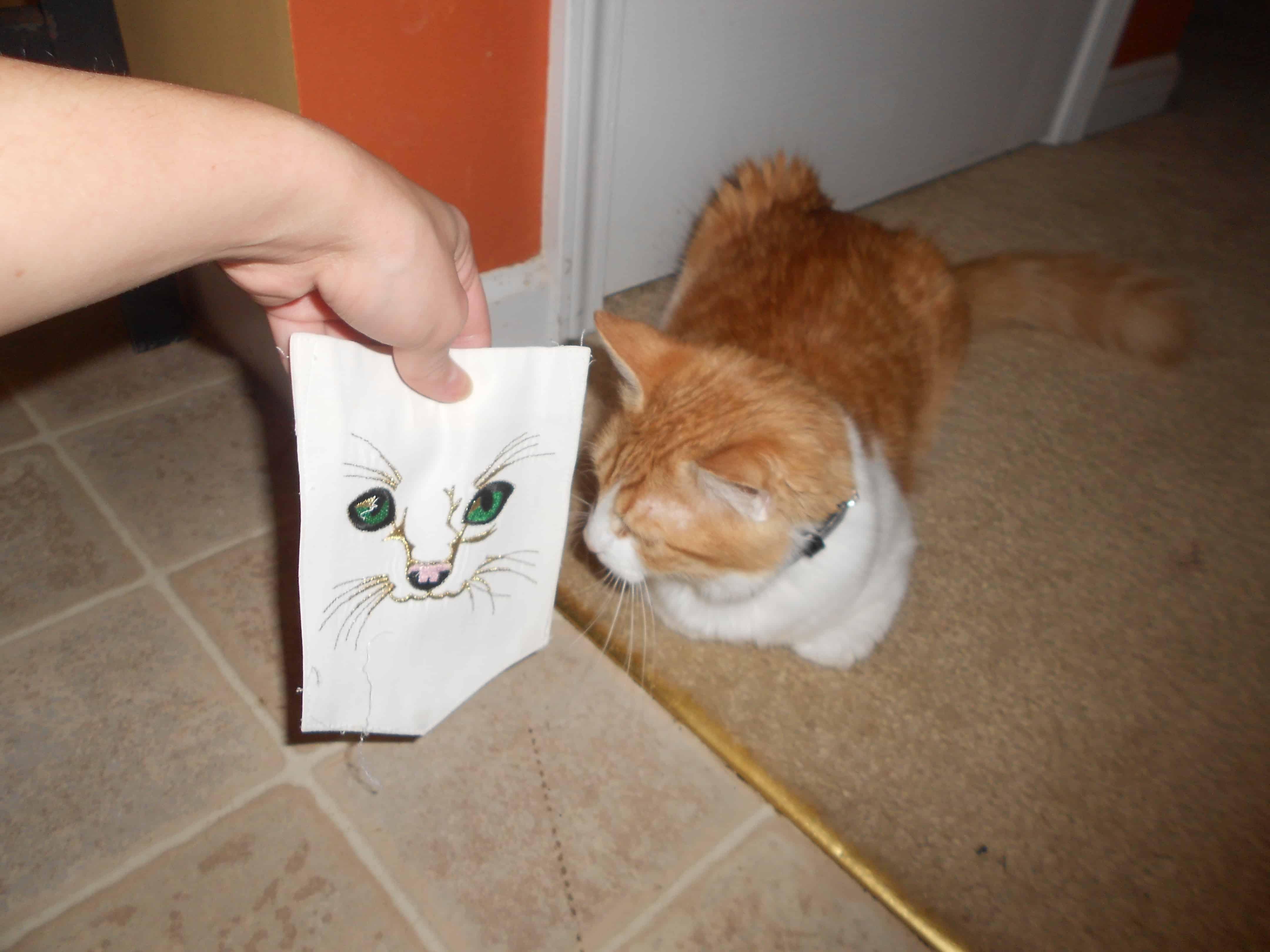 cat looking at cat pocket