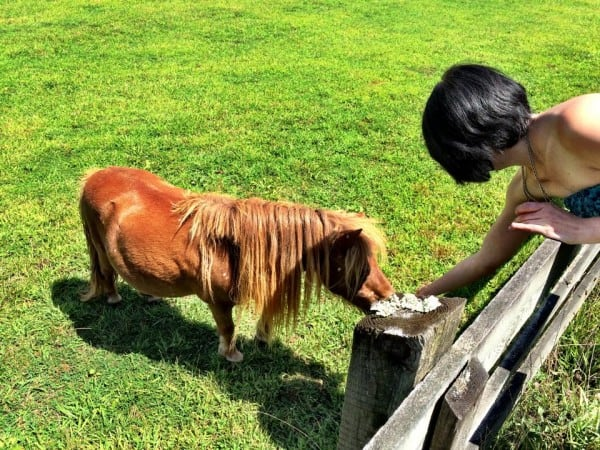 miniature horse with refashionista
