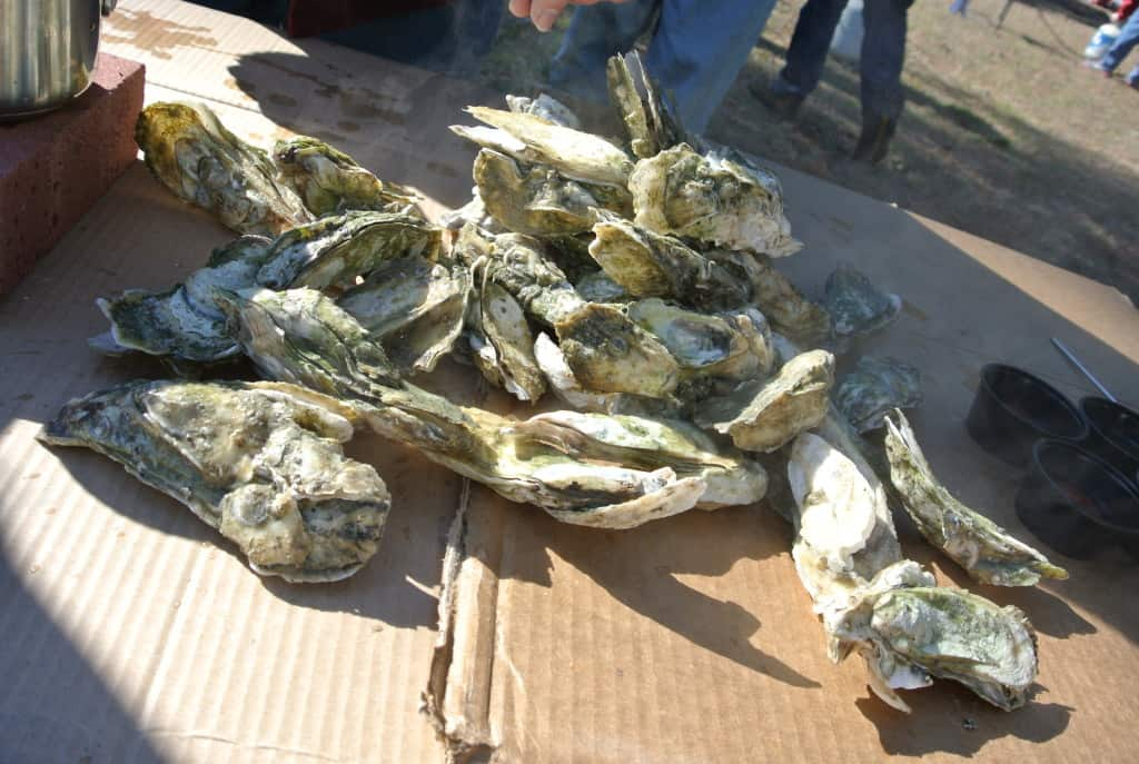 closeup of pile of oysters
