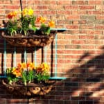 I Never Promised You a Wall Garden: An Easy DIY Tutorial
