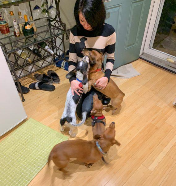 refashionista in dachshund sweater surround by dachshunds