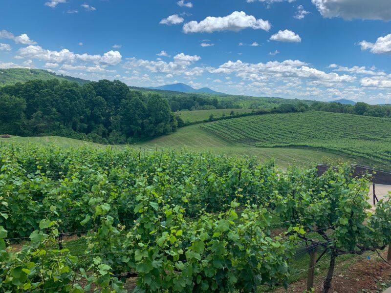 Dahlonega winery