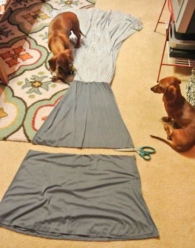 dogs looking at dress
