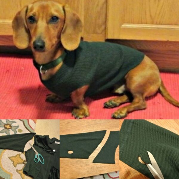 No-Sew DIY Dog Sweater from Old Sweater Pin 5