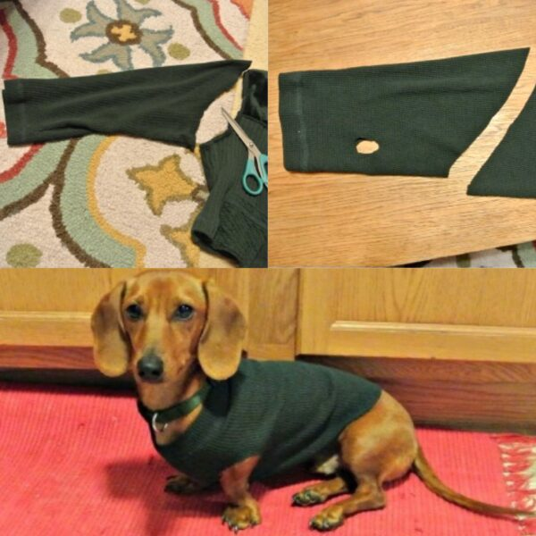 No-Sew DIY Dog Sweater from Old Sweater Pin 4